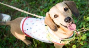 外を散歩中のペットの犬の写真