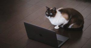 パソコンの前で驚いている猫の写真