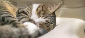 寝て休憩している猫の画像
