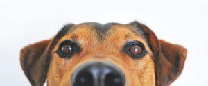 こちらを見ている犬